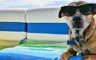 Consejos para disfrutar de la playa o piscina con tu perro